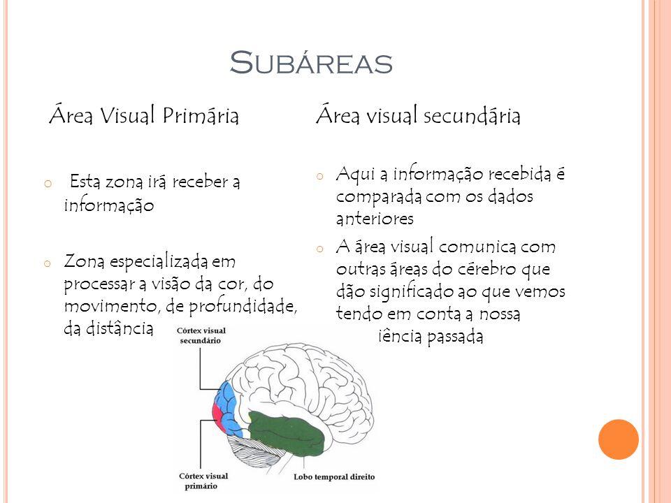 Subáreas Área Visual Primária Esta zona irá receber a informação