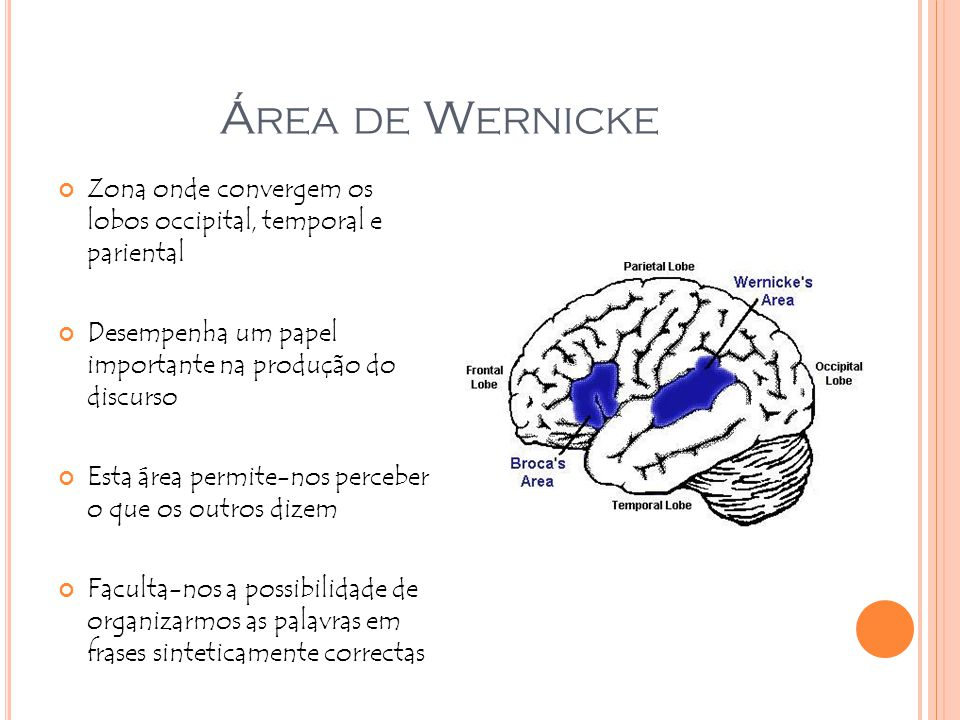 Área de Wernicke Zona onde convergem os lobos occipital, temporal e pariental. Desempenha um papel importante na produção do discurso.
