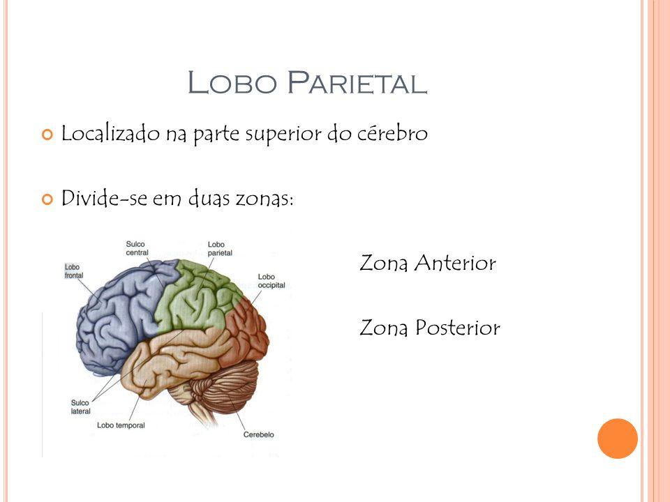 Lobo Parietal Localizado na parte superior do cérebro