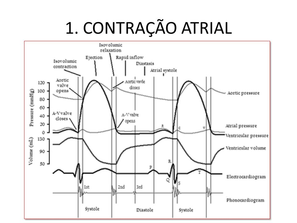 1. CONTRAÇÃO ATRIAL
