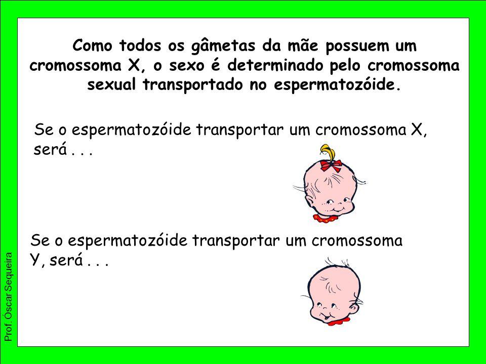 Se o espermatozóide transportar um cromossoma X, será . . .