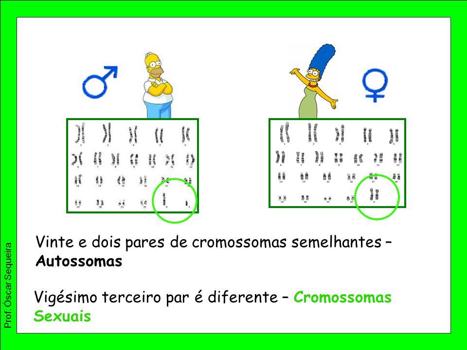 Vinte e dois pares de cromossomas semelhantes – Autossomas