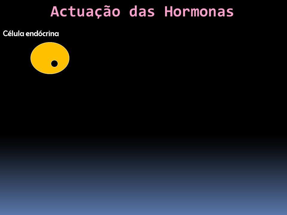 Actuação das Hormonas Célula endócrina
