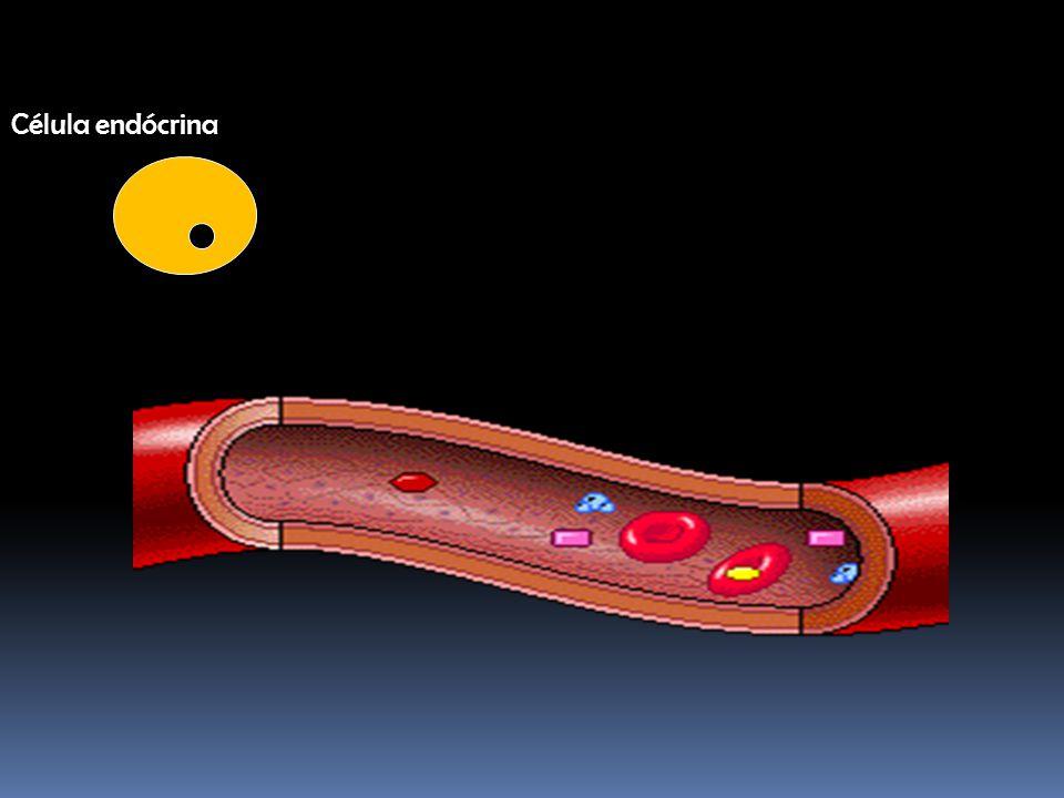 Célula endócrina