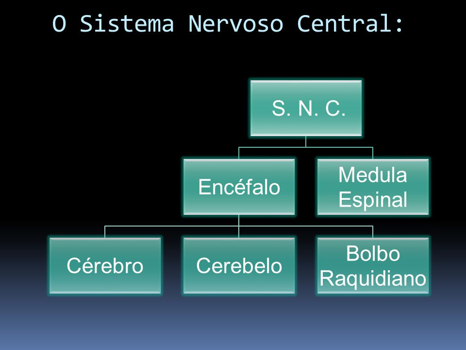 O Sistema Nervoso Central: