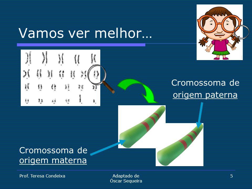 Cromossoma de origem paterna