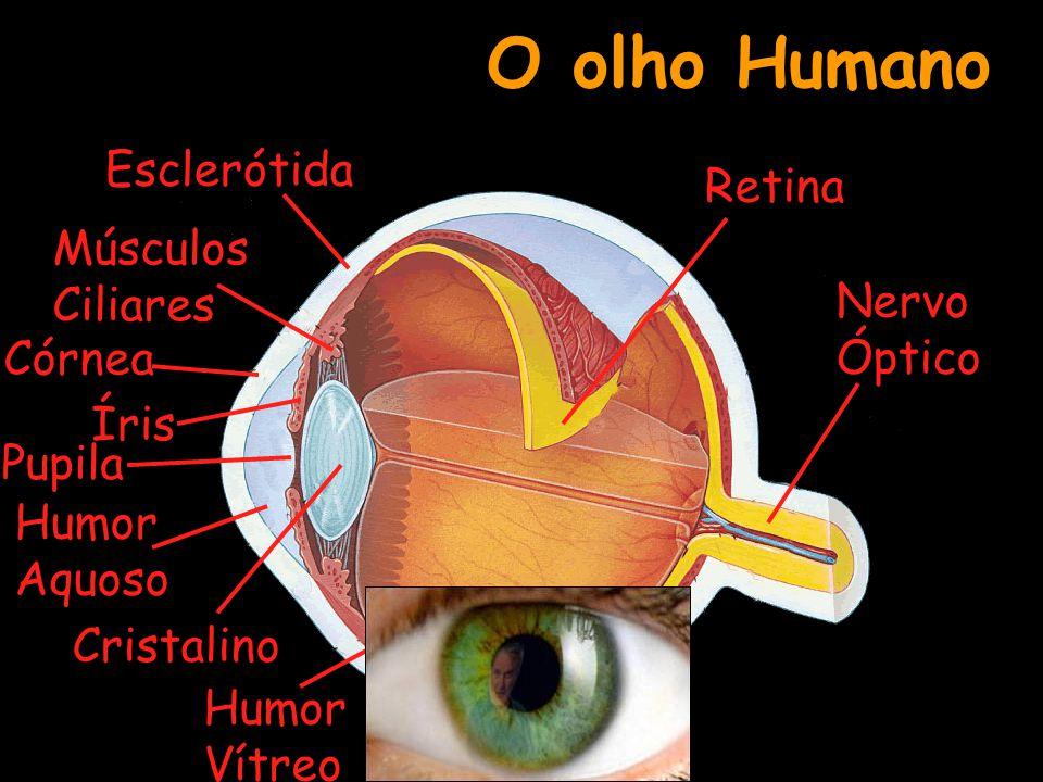 O olho Humano Esclerótida Retina Músculos Ciliares Nervo Óptico Córnea