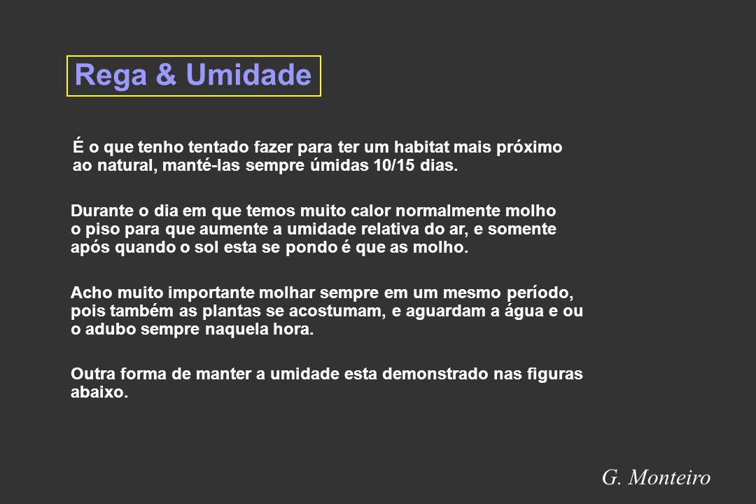 Rega & Umidade G. Monteiro