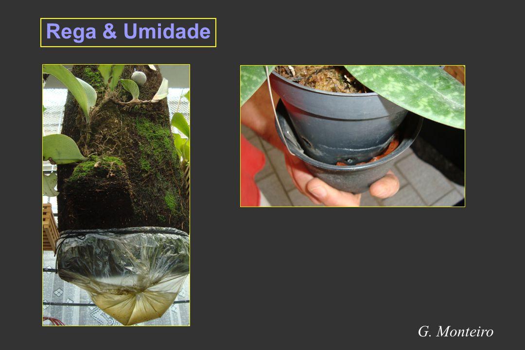 Rega & Umidade G. Monteiro 11