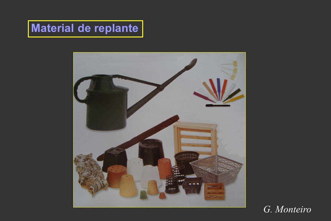 Material de replante G. Monteiro