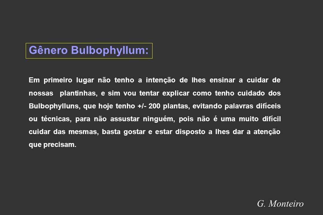 Gênero Bulbophyllum: G. Monteiro