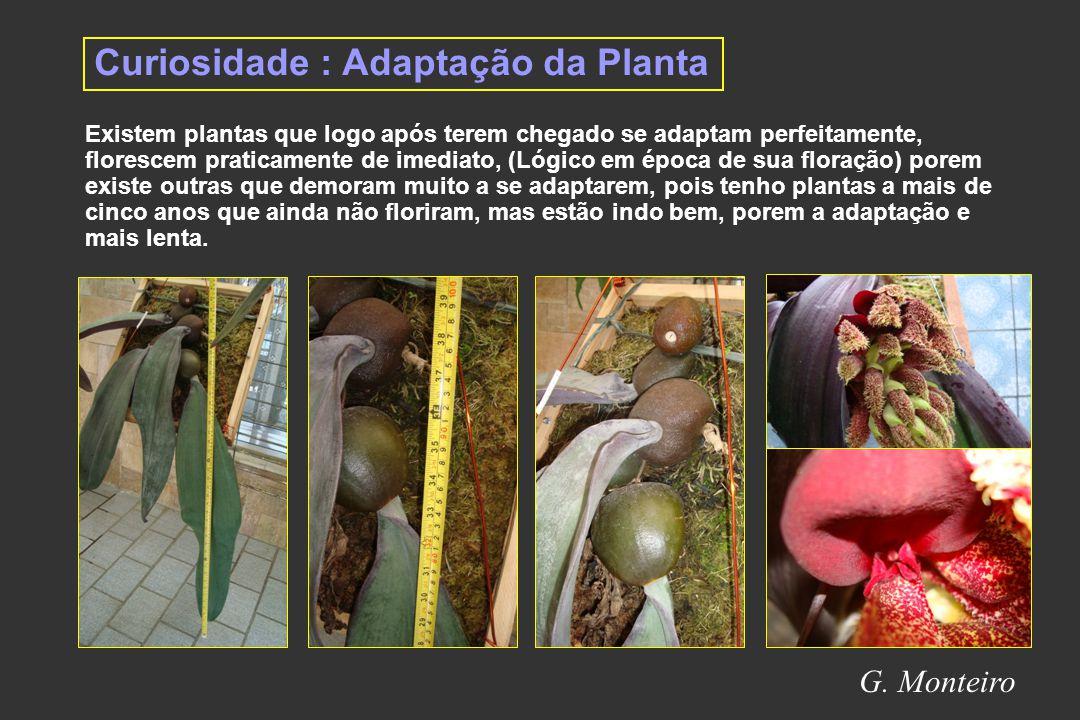Curiosidade : Adaptação da Planta