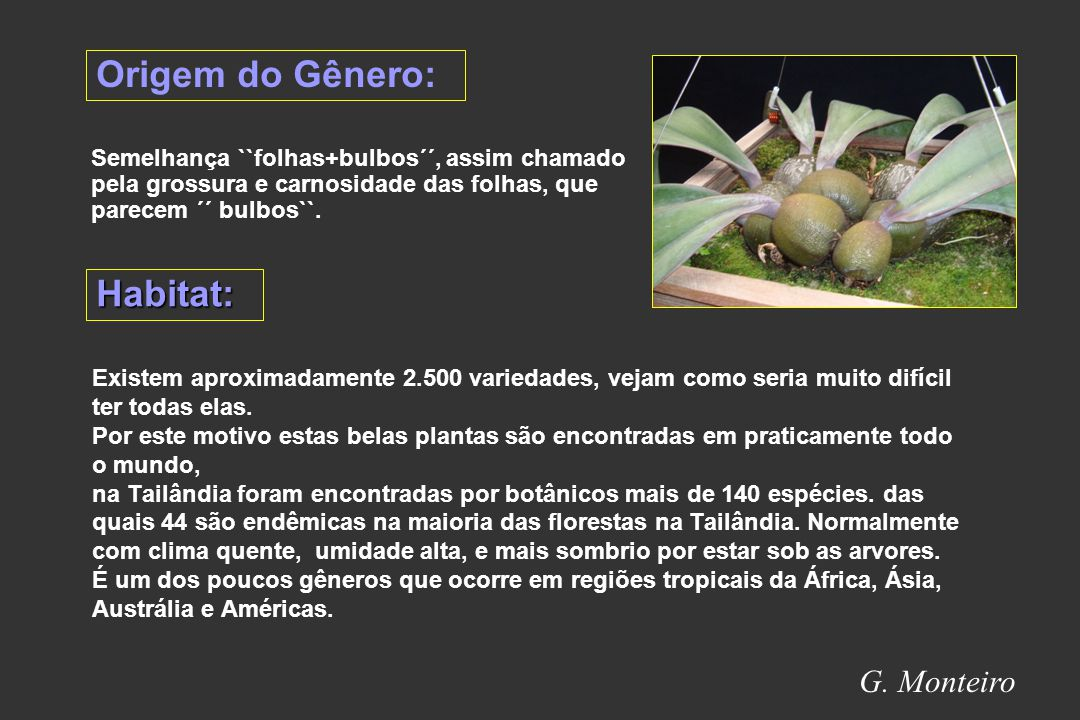 Origem do Gênero: Habitat: G. Monteiro