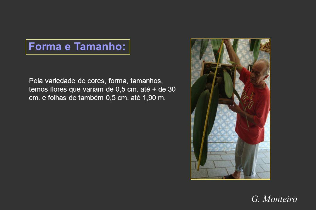 Forma e Tamanho: G. Monteiro