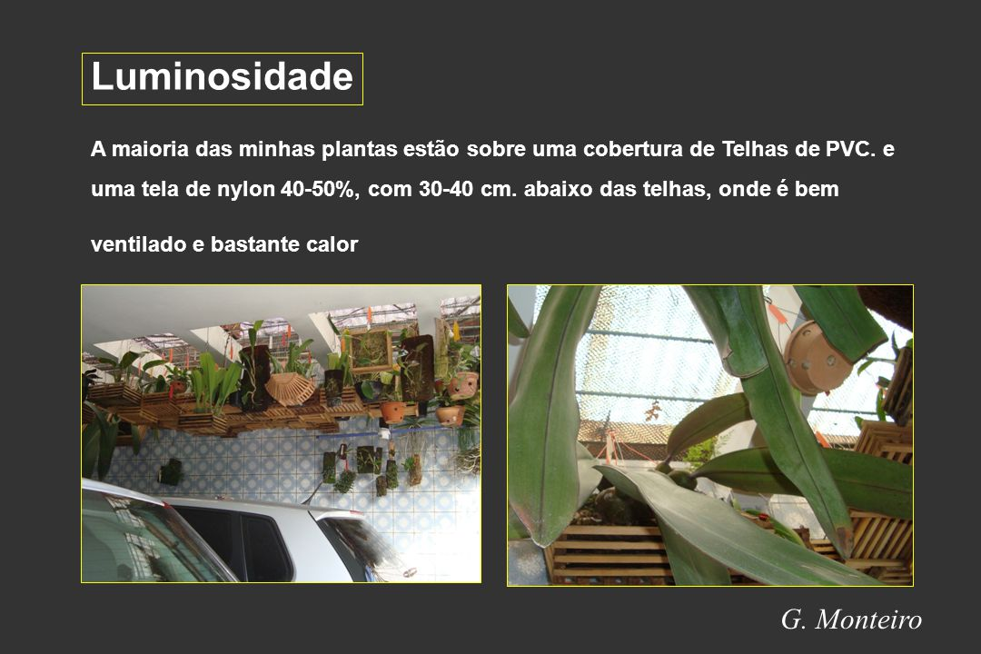 Luminosidade G. Monteiro