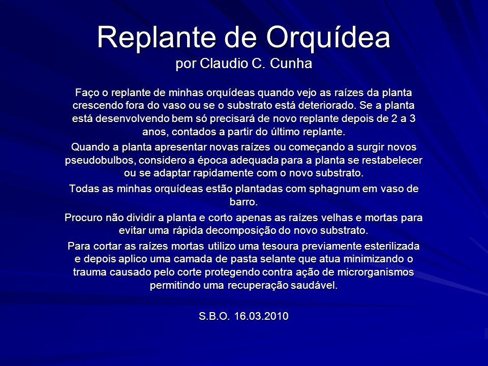 Replante de Orquídea por Claudio C. Cunha