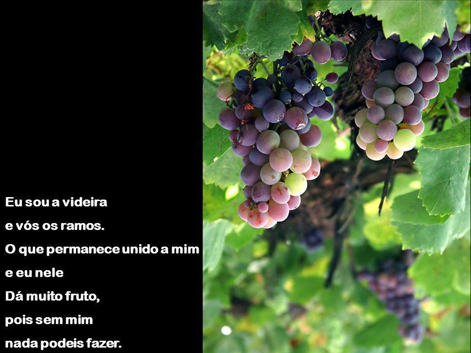 Eu sou a videira e vós os ramos. O que permanece unido a mim. e eu nele. Dá muito fruto, pois sem mim.