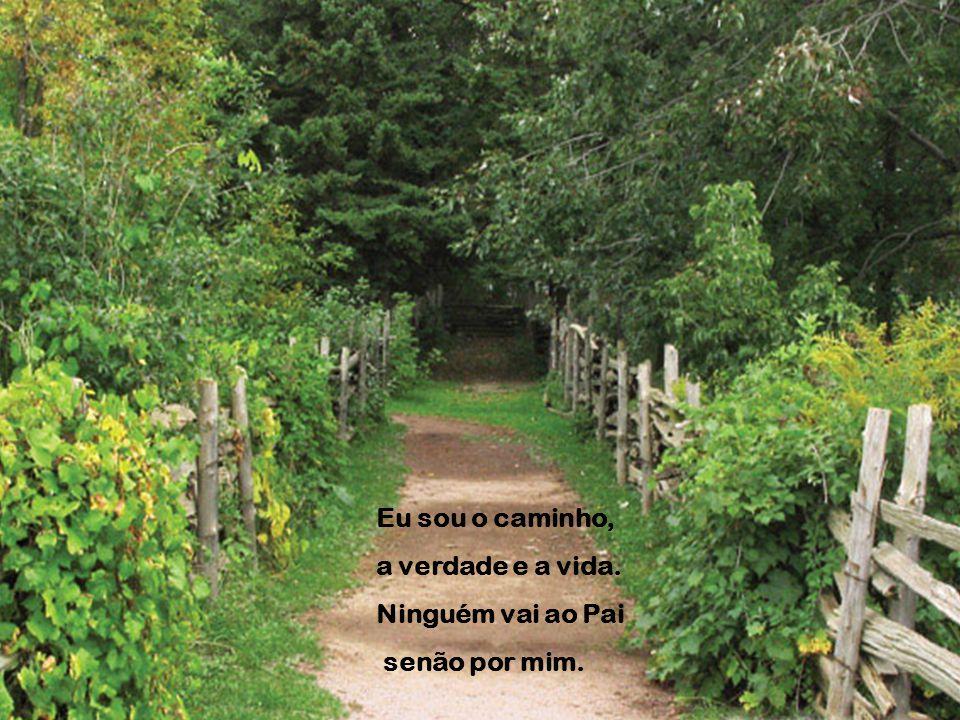 Eu sou o caminho, a verdade e a vida. Ninguém vai ao Pai senão por mim.