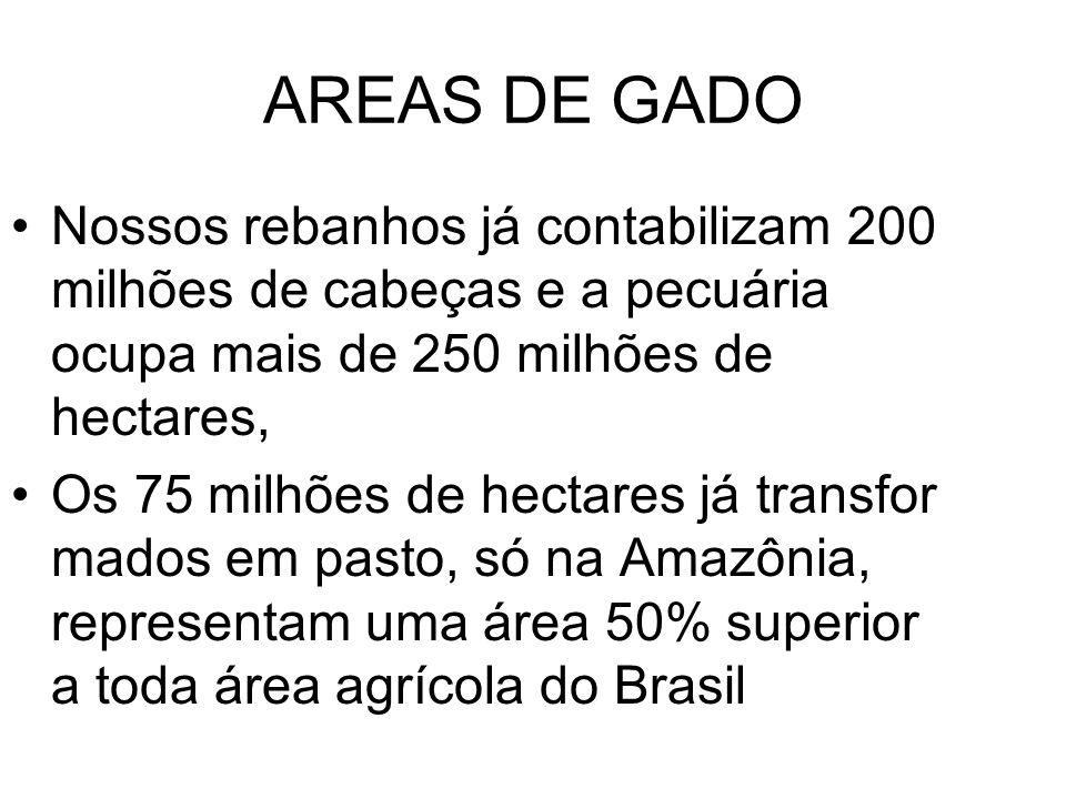 AREAS DE GADO Nossos rebanhos já contabilizam 200 milhões de cabeças e a pecuária ocupa mais de 250 milhões de hectares,