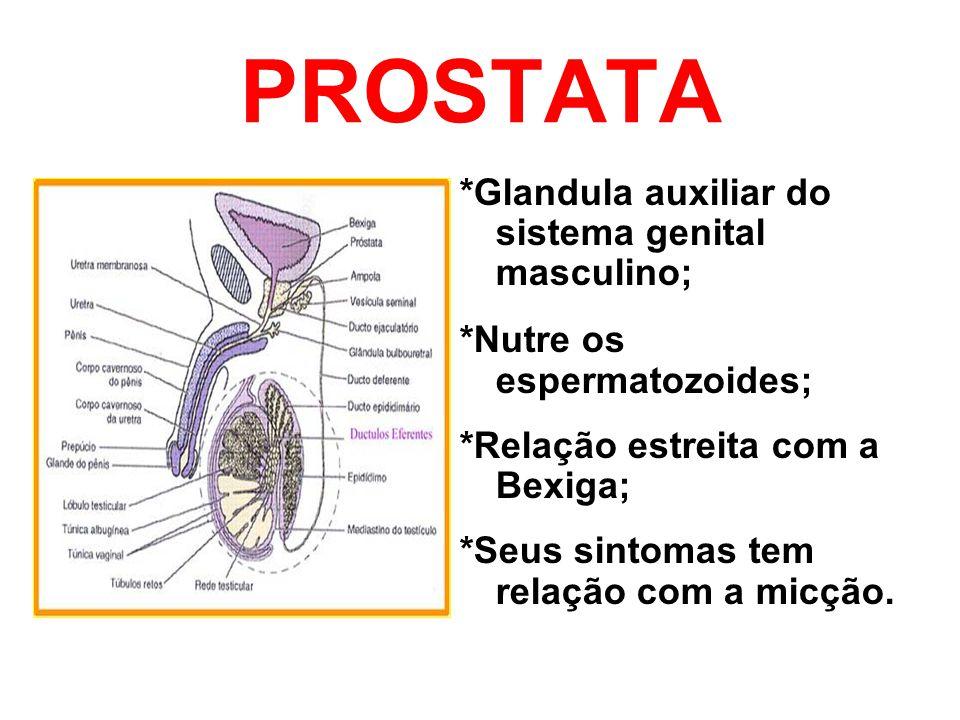 PROSTATA *Glandula auxiliar do sistema genital masculino;