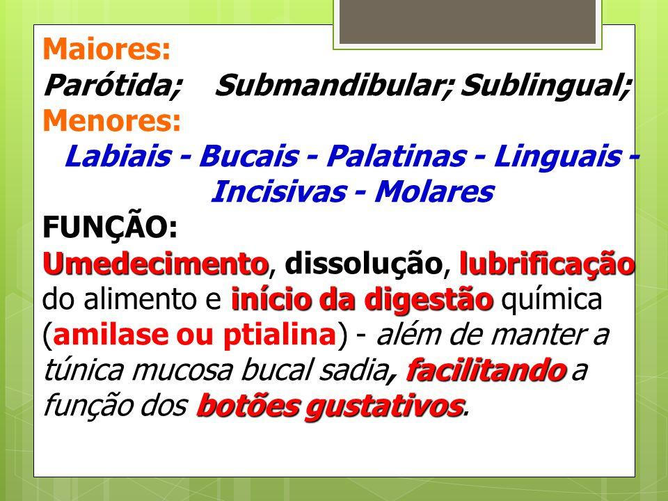 Labiais - Bucais - Palatinas - Linguais - Incisivas - Molares