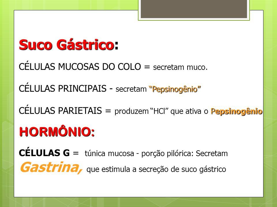 Gastrina, que estimula a secreção de suco gástrico