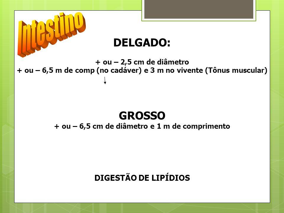 Intestino DELGADO: GROSSO DIGESTÃO DE LIPÍDIOS