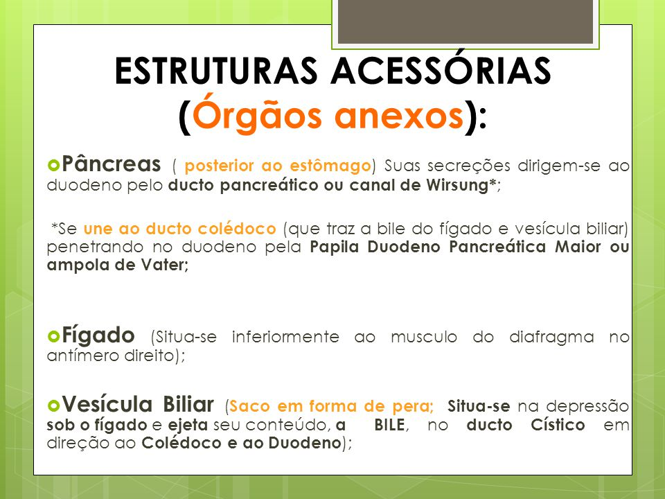 ESTRUTURAS ACESSÓRIAS (Órgãos anexos):