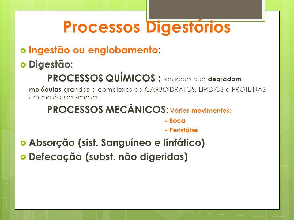 Processos Digestórios