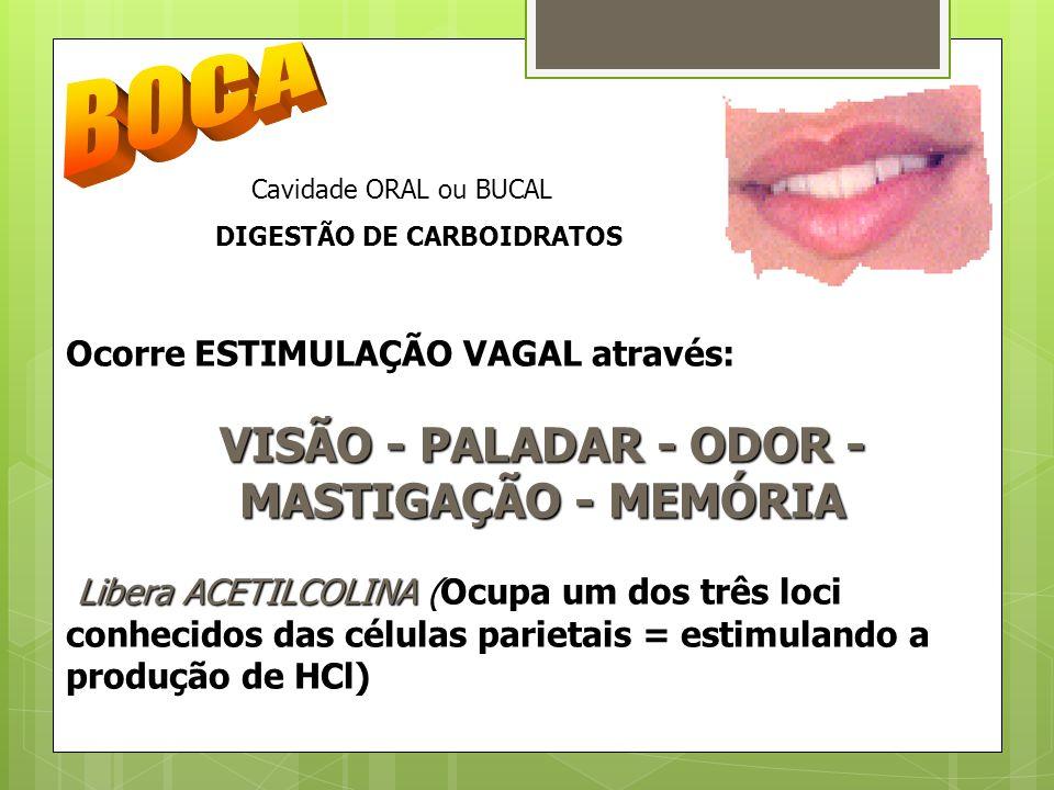 DIGESTÃO DE CARBOIDRATOS VISÃO - PALADAR - ODOR - MASTIGAÇÃO - MEMÓRIA
