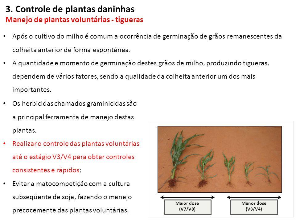 3. Controle de plantas daninhas Manejo de plantas voluntárias - tigueras
