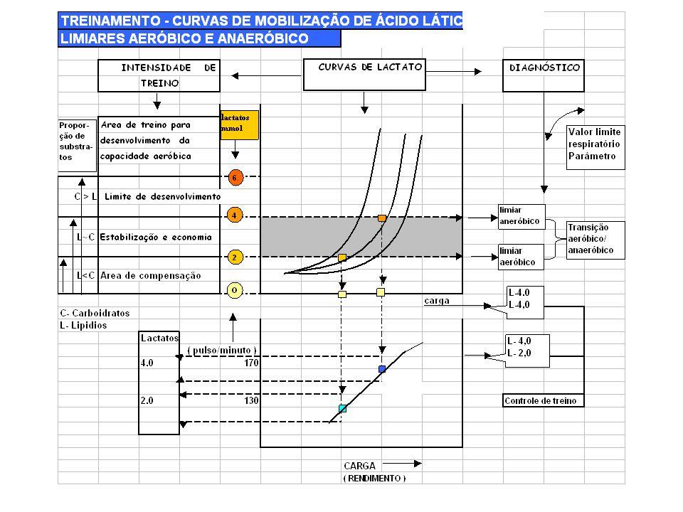 TREINAMENTO- CURVAS SEGUNDO MOBILIZAÇÃO DE ÁCIDO LÁTICO- LIMIARES AERÓBICO E ANAERÓBICO