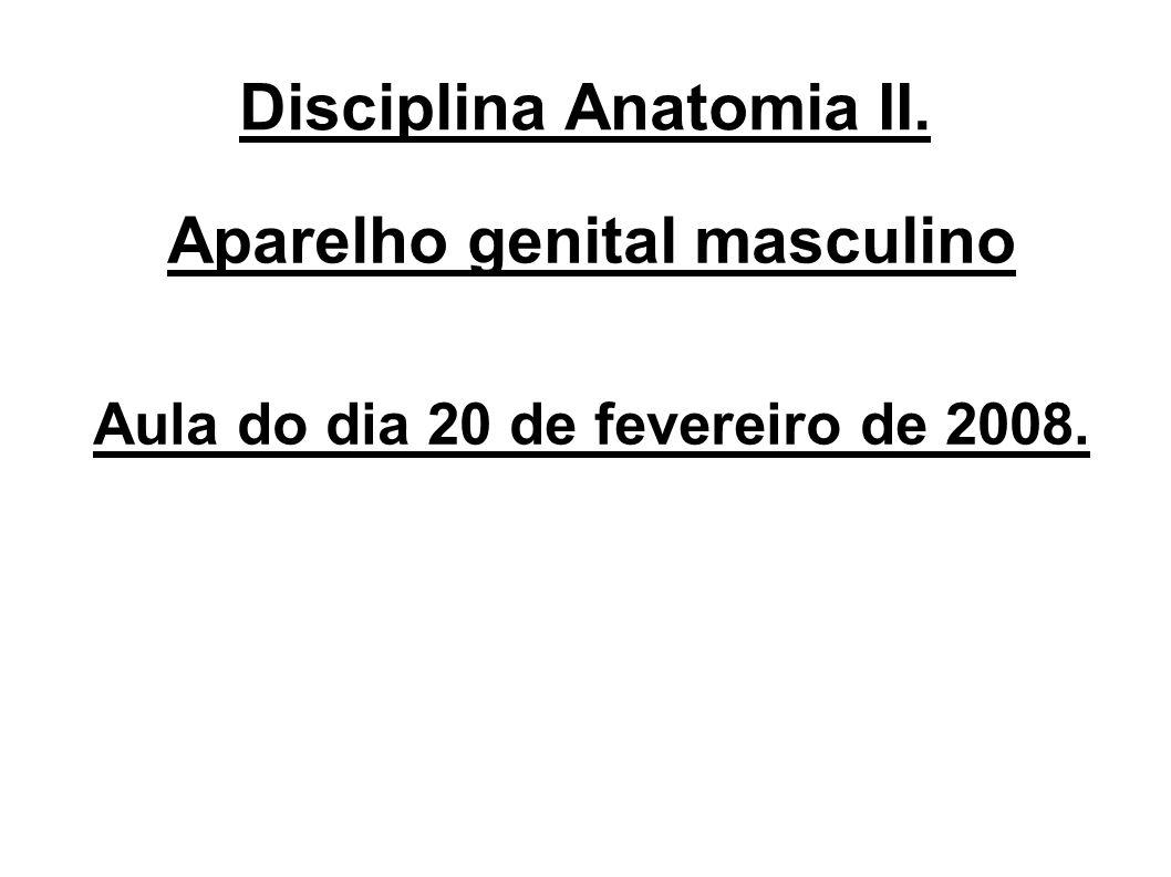 Disciplina Anatomia II.