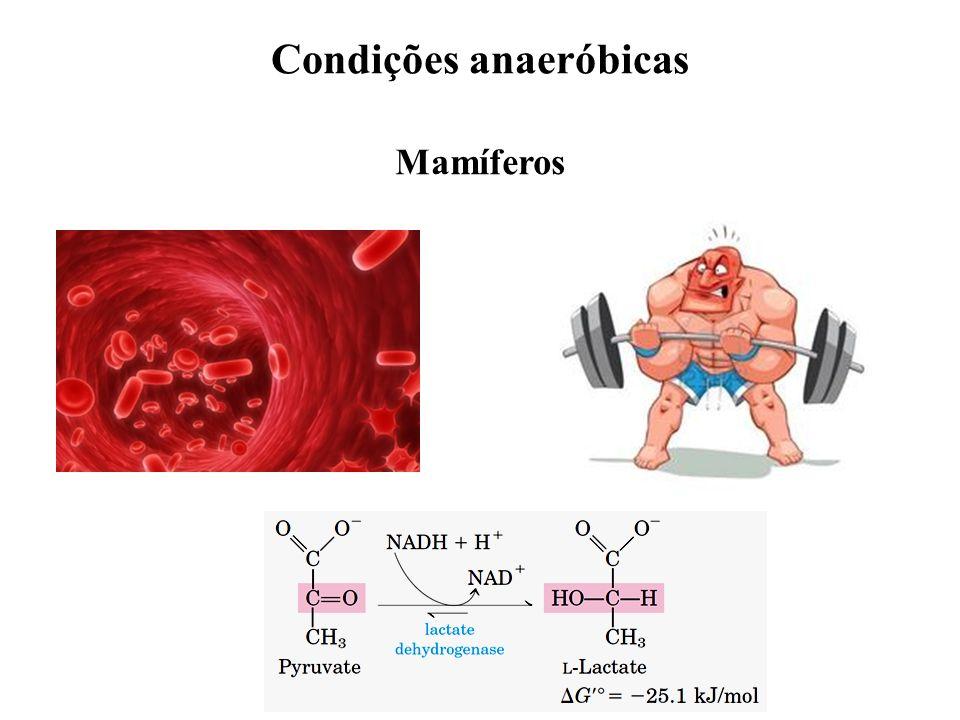 Condições anaeróbicas