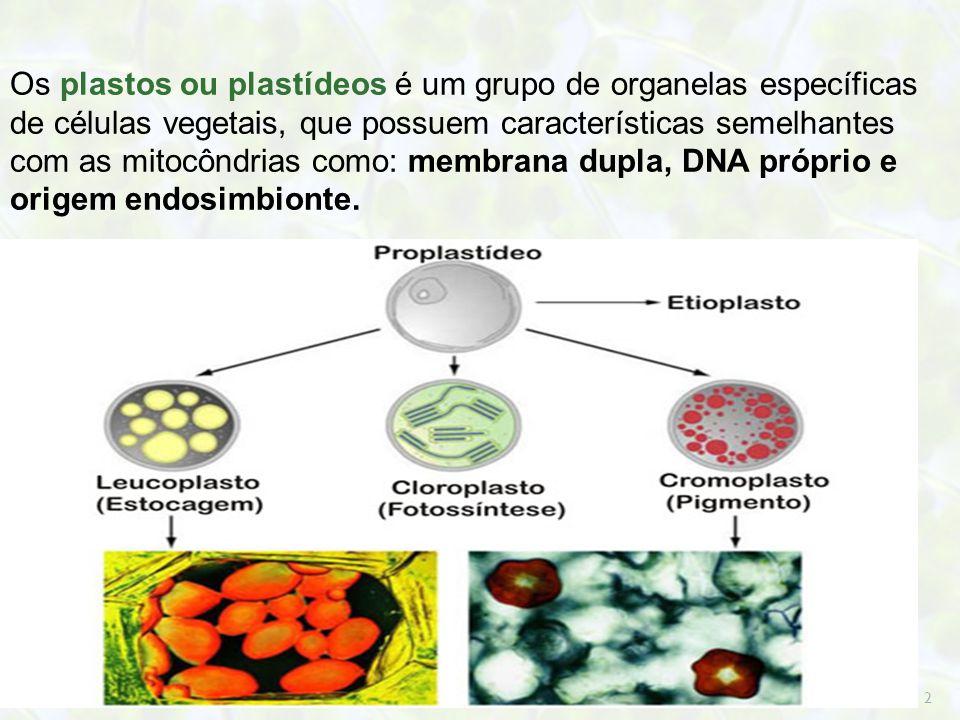 Os plastos ou plastídeos é um grupo de organelas específicas de células vegetais, que possuem características semelhantes com as mitocôndrias como: membrana dupla, DNA próprio e origem endosimbionte.