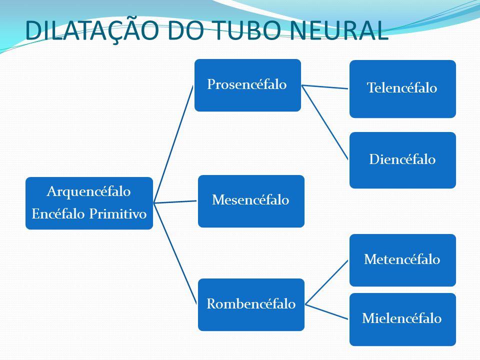 DILATAÇÃO DO TUBO NEURAL