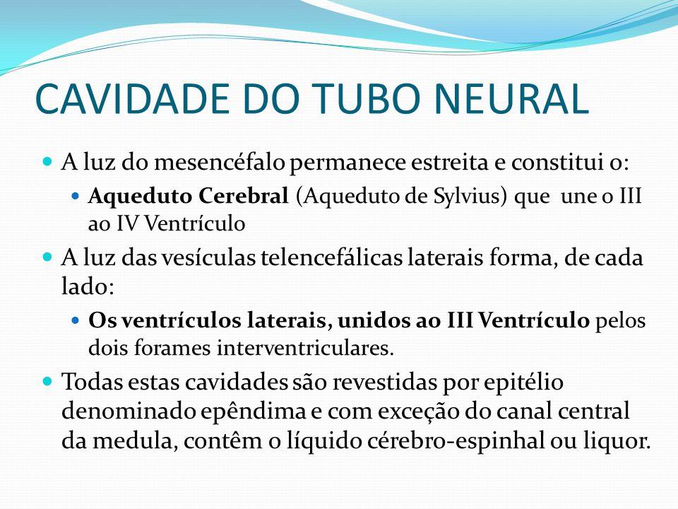 CAVIDADE DO TUBO NEURAL