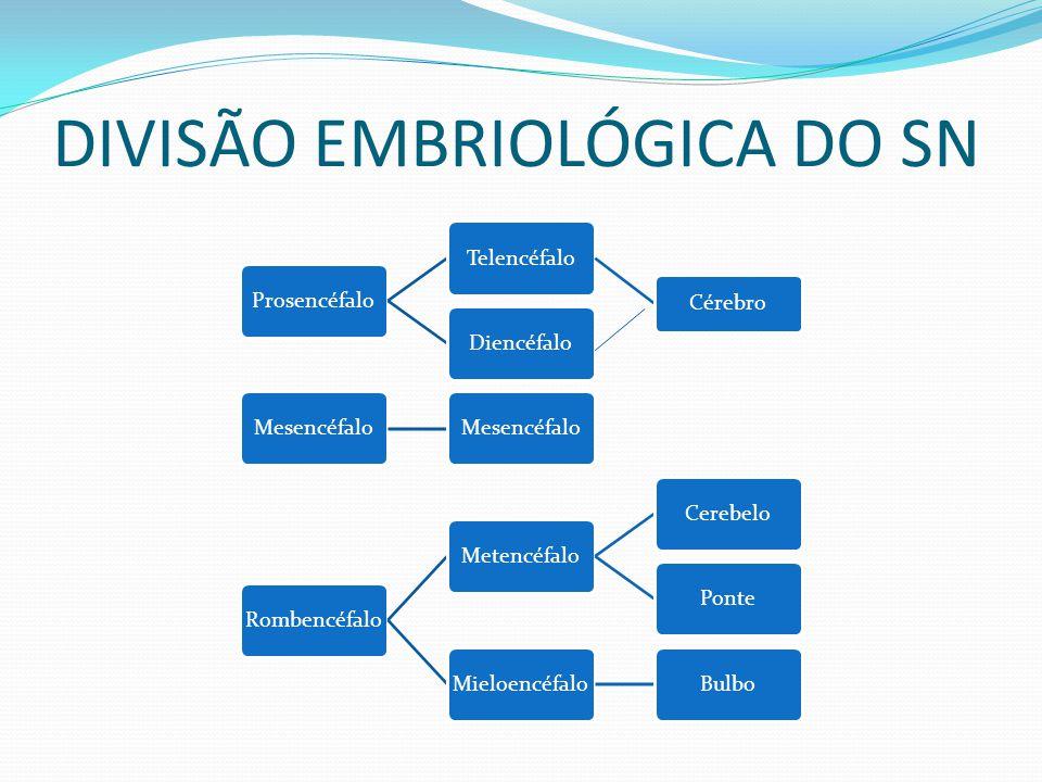 DIVISÃO EMBRIOLÓGICA DO SN