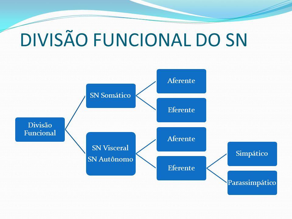 DIVISÃO FUNCIONAL DO SN