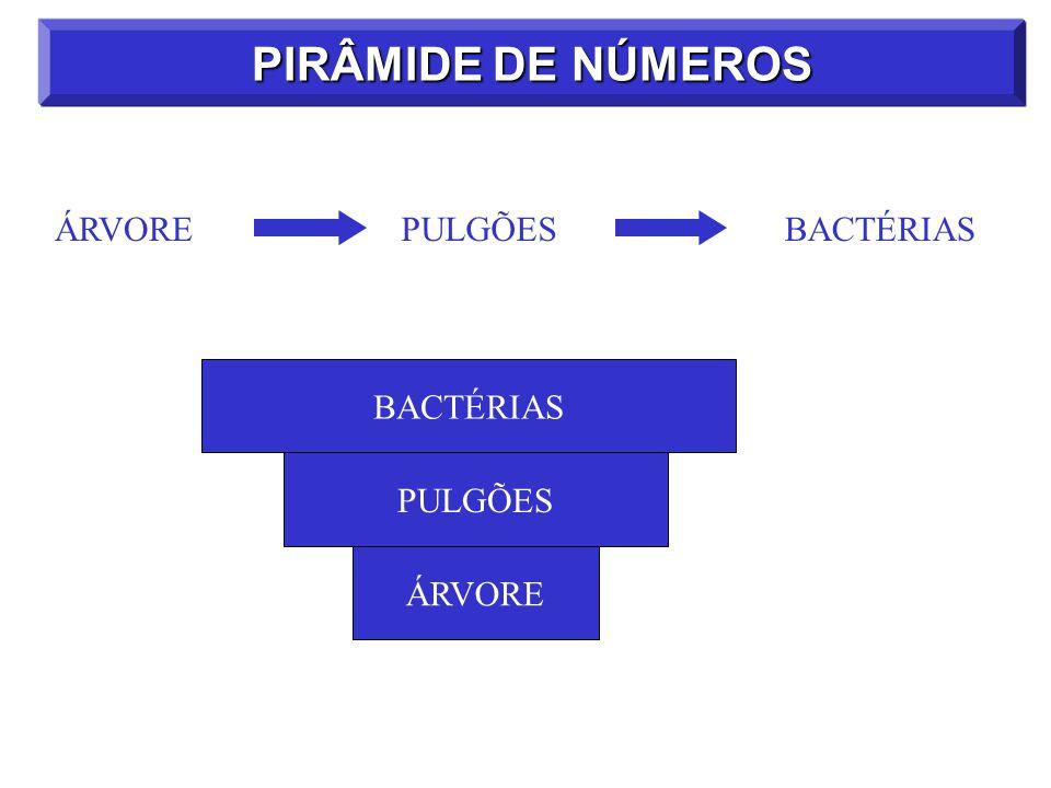 PIRÂMIDE DE NÚMEROS ÁRVORE PULGÕES BACTÉRIAS BACTÉRIAS PULGÕES ÁRVORE