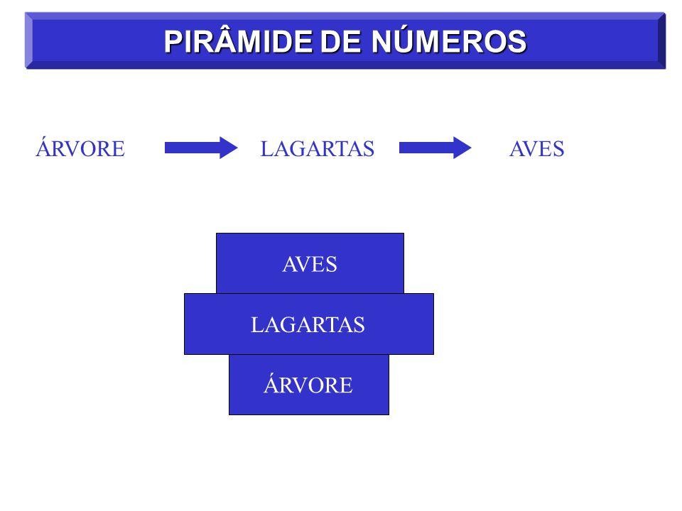 PIRÂMIDE DE NÚMEROS ÁRVORE LAGARTAS AVES AVES LAGARTAS ÁRVORE