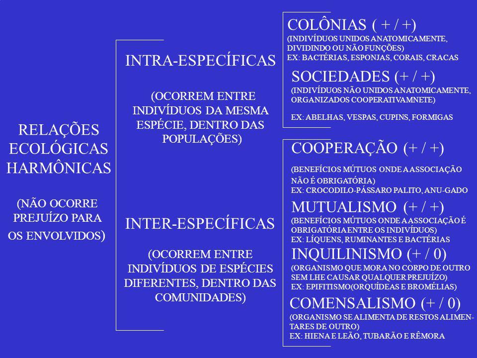 INDIVÍDUOS DE ESPÉCIES