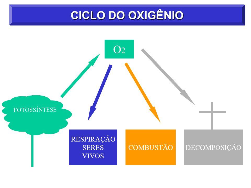CICLO DO OXIGÊNIO O2 DECOMPOSIÇÃO COMBUSTÃO RESPIRAÇÃO SERES VIVOS