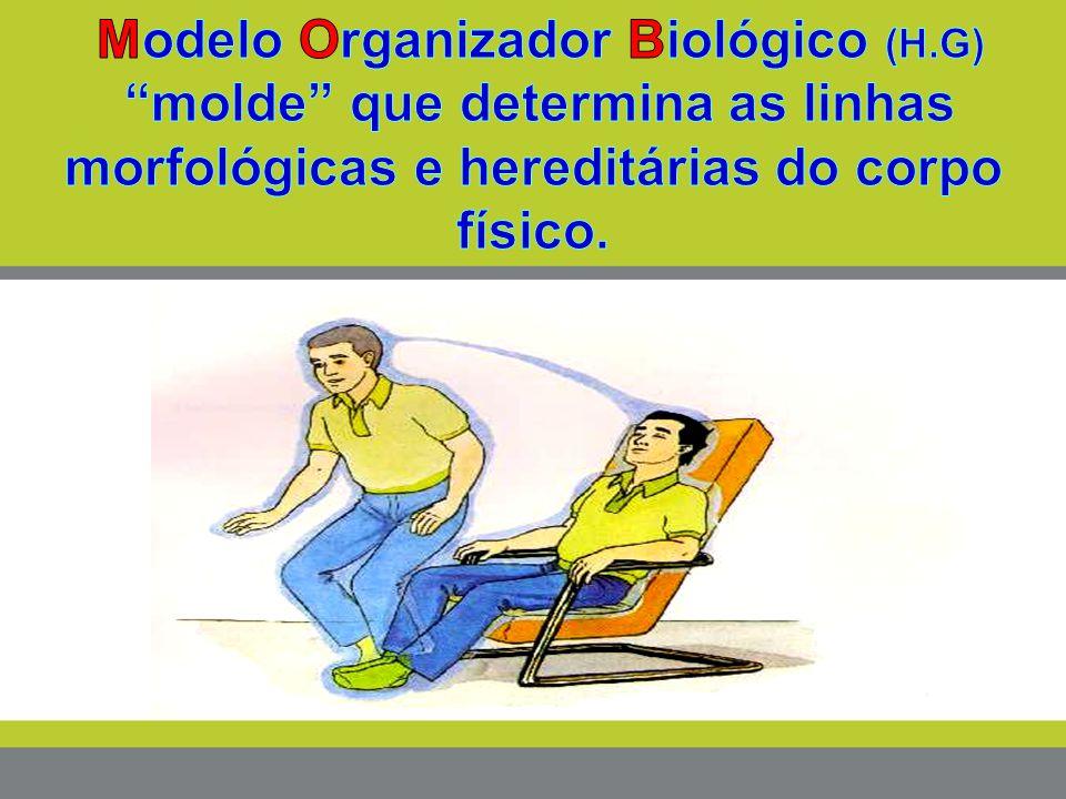 Modelo Organizador Biológico (H.G)