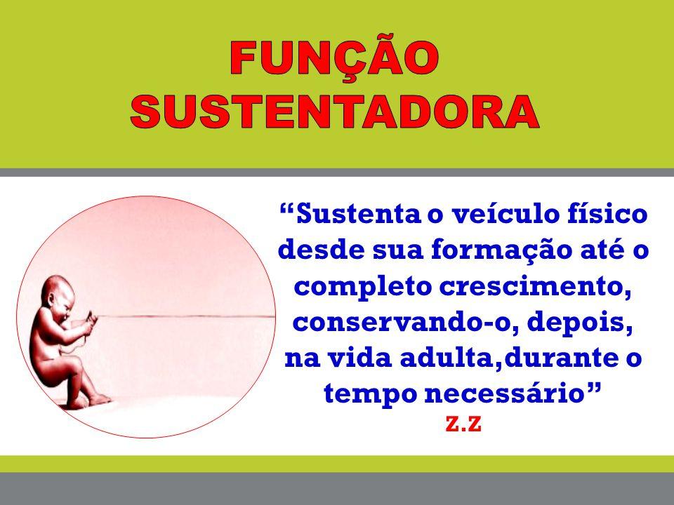 FUNÇÃO SUSTENTADORA
