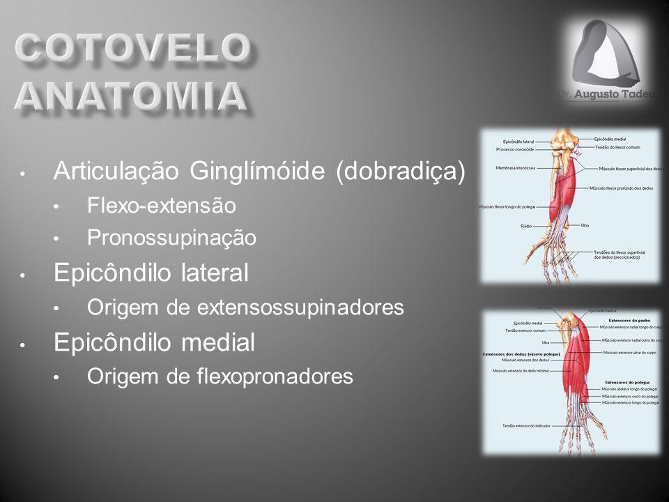 cotovelo anatomia Articulação Ginglímóide (dobradiça)