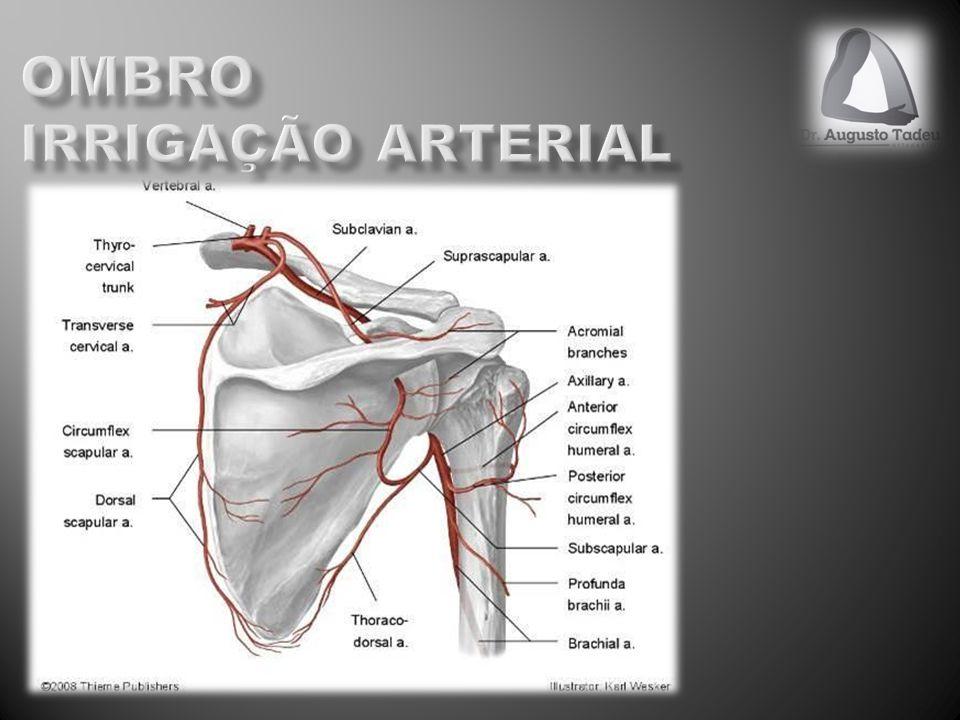 Ombro irrigação arterial