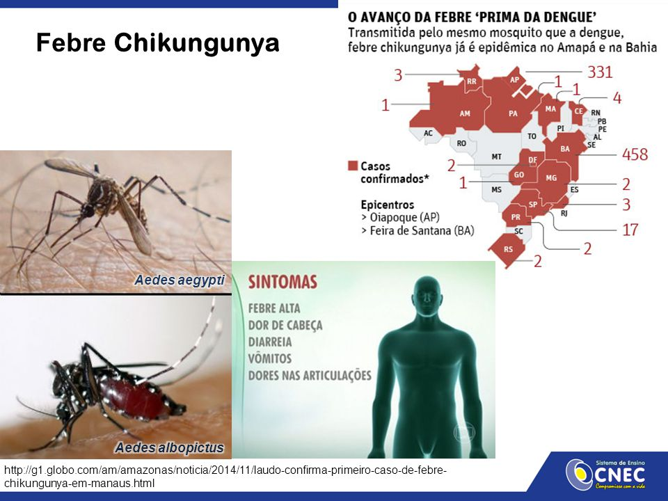 Febre Chikungunya Aedes aegypti Aedes albopictus