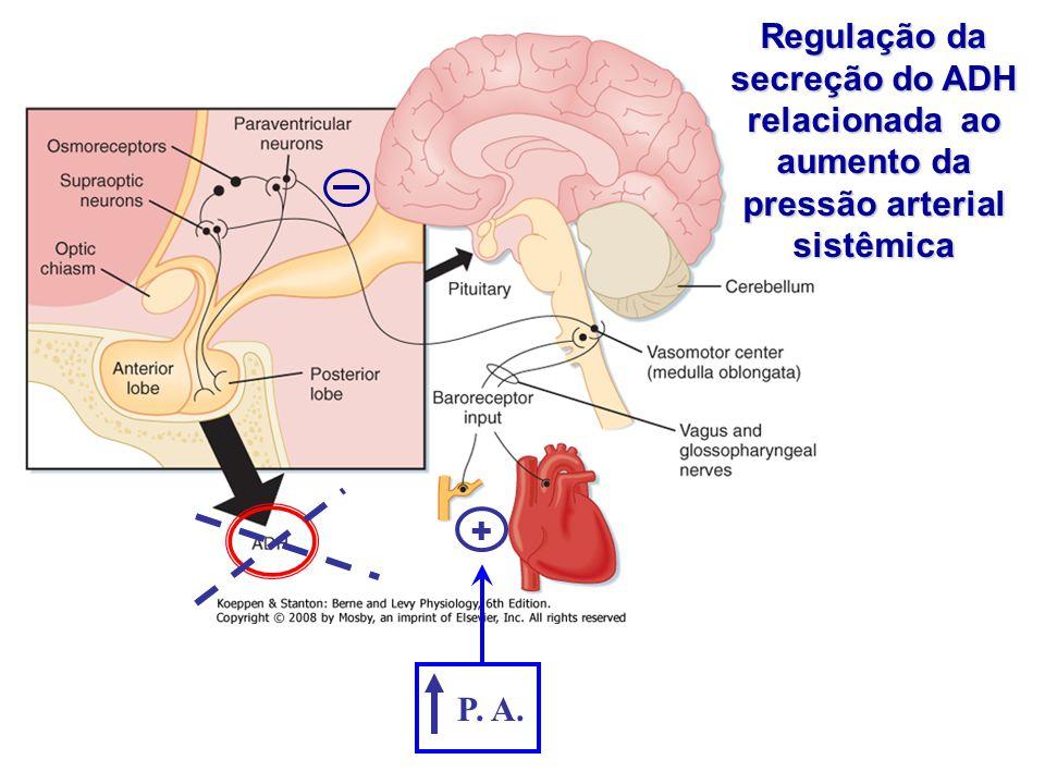 Regulação da secreção do ADH relacionada ao aumento da pressão arterial sistêmica