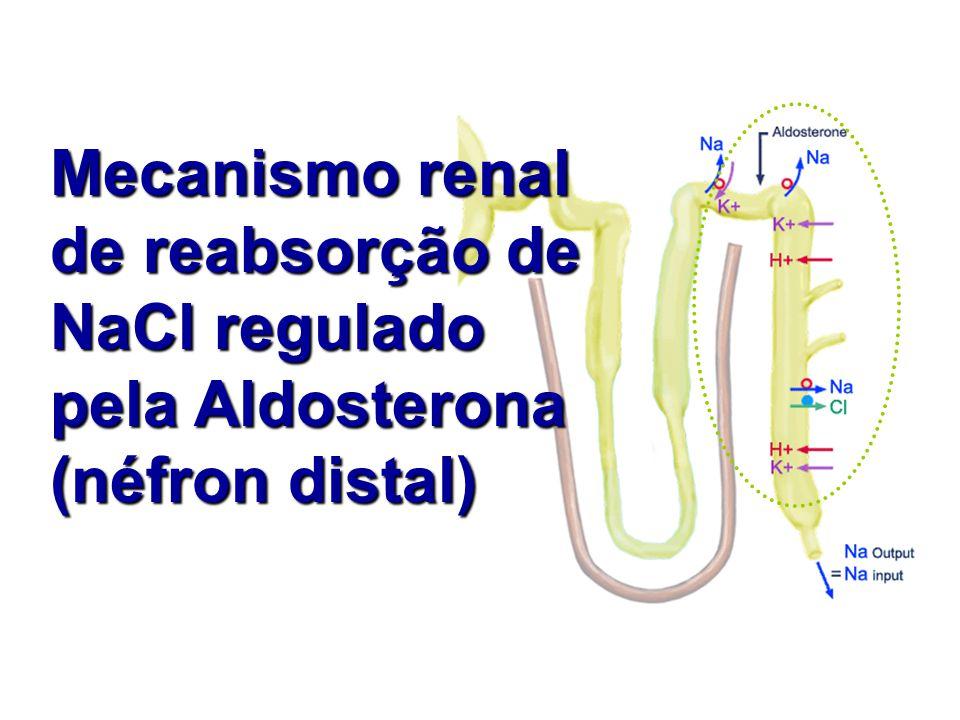 Mecanismo renal de reabsorção de NaCl regulado pela Aldosterona (néfron distal)